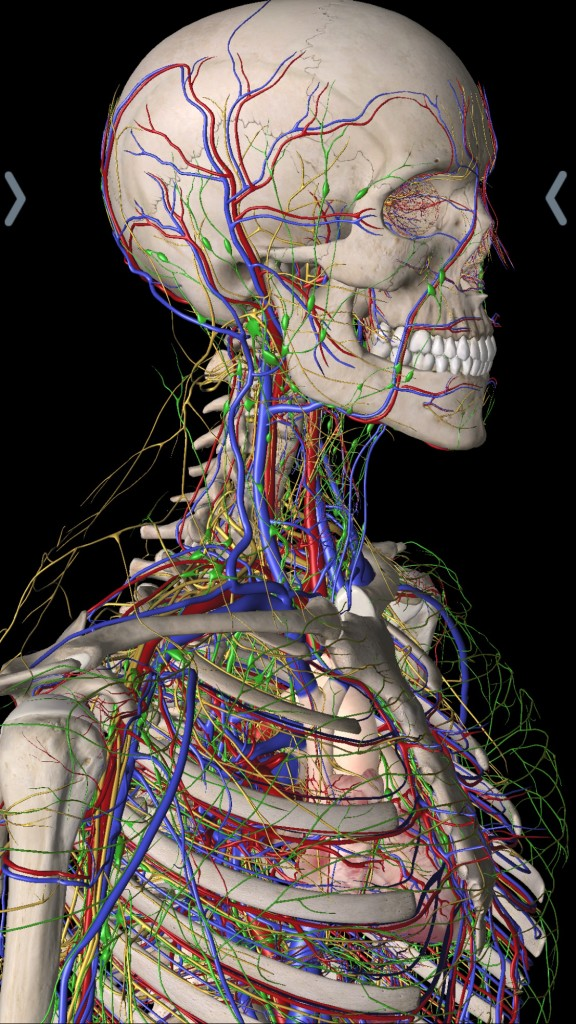 What does gross anatomy mean 1134320 - follow4more.info