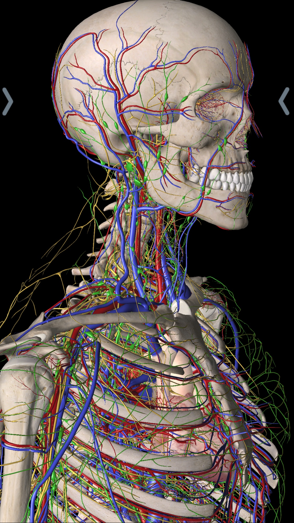 Surviving Gross Anatomy In Medical School Mod Med