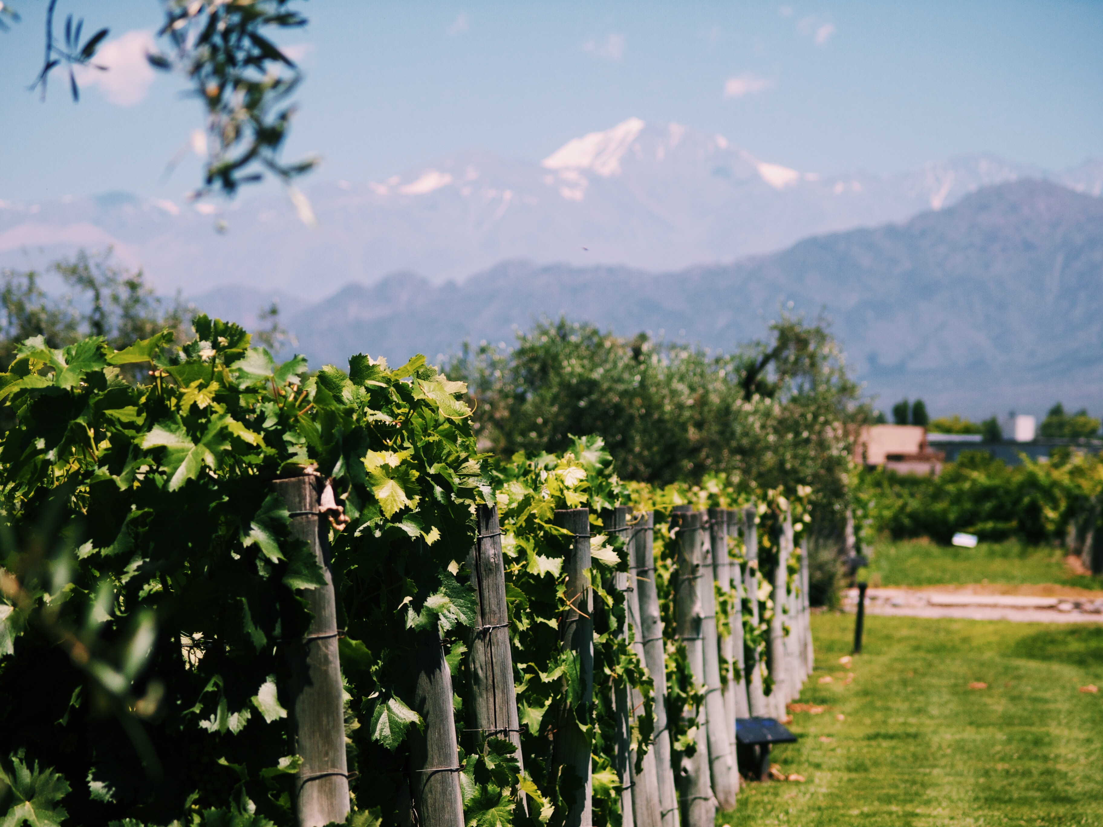 Gay mendoza: a gay travel guide to the wine capital of argentina.